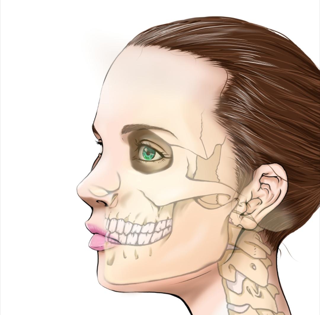 顔の骨格が分かる美容用女性の横顔イラスト